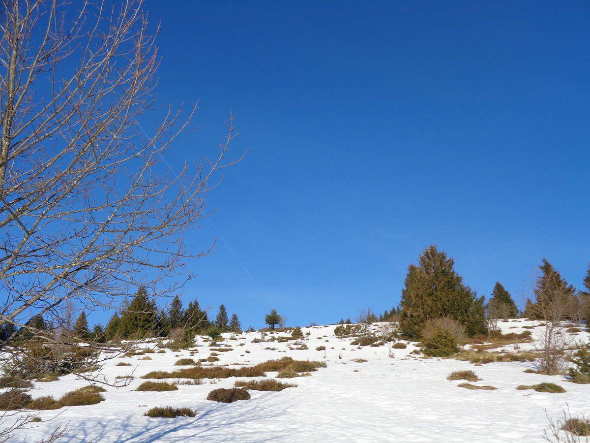 Vers le sommet de l'Altenkraehkopf (1277m)