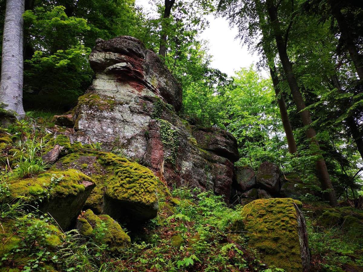 Dans ces zones ombragées et humides, les mousses archi présentes, contribuent à égayer les dégradés de vert.