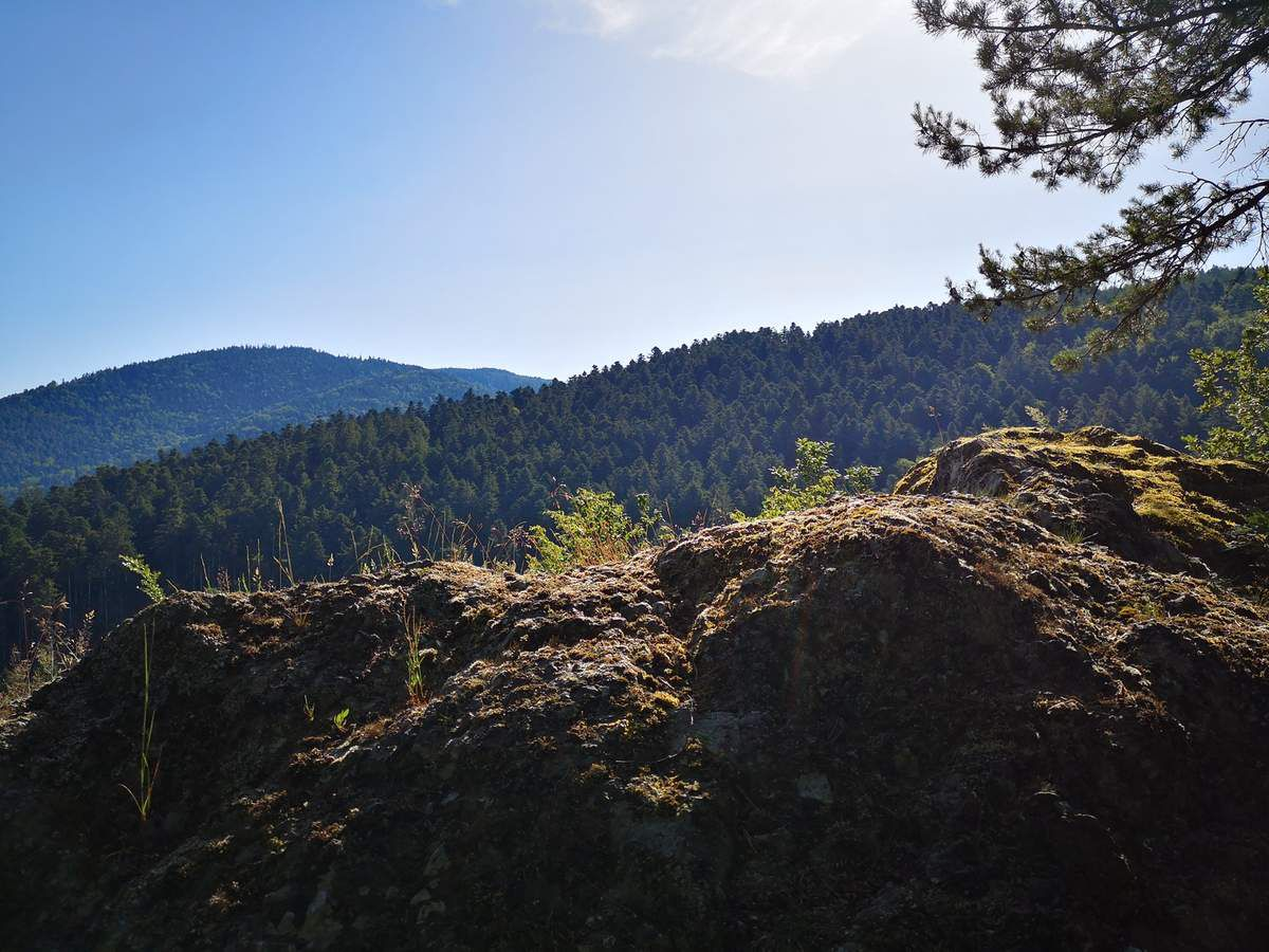 le sinueux et raide sentier mène au sommet du Petit Donon autour de 504 mètre d'altitude.