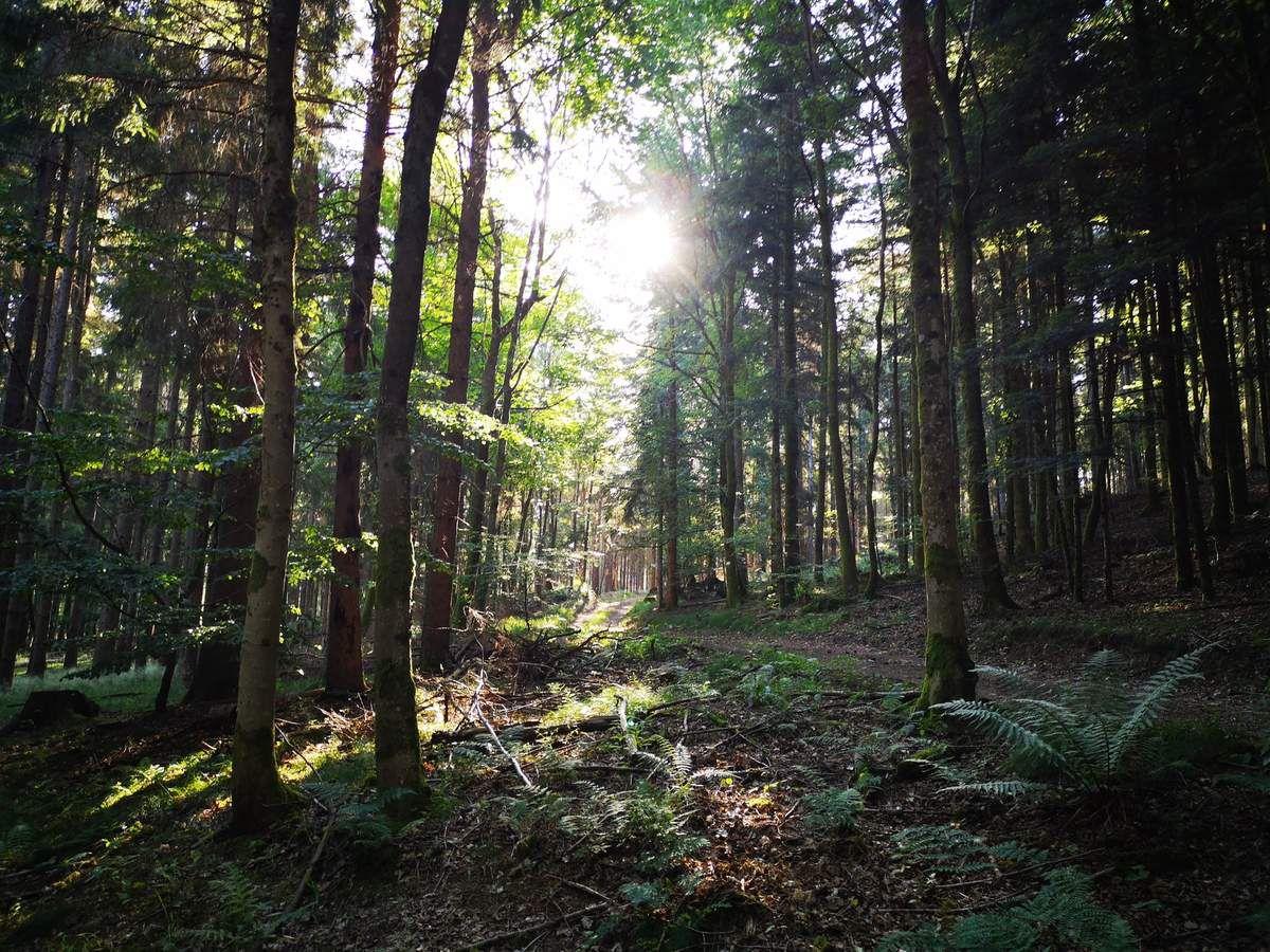 Ma randonnée m'emmène rapidement en forêt, les jeux d'ombres et de lumières, y sont fort plaisants.