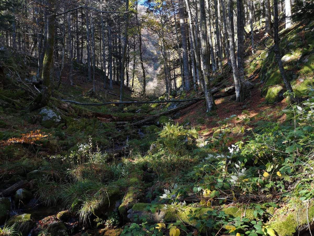 """au lieu dit """"L'Ammelthal"""", altitude 1030m. Juste au-dessus de la cascade qui surplombe le Fischboedle."""