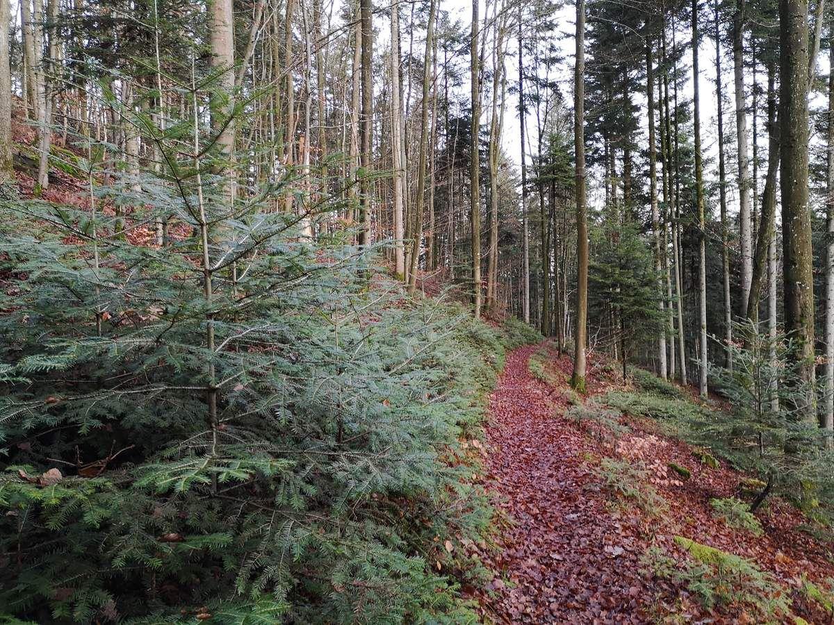 Nous suivons le sentier balisé Triangle Jaune, en direction de Lochmuehl.