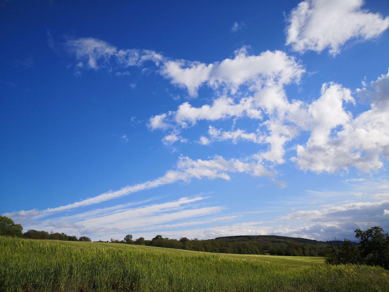 Au dessus du Wangenberg, les nuages d'altitude perturbent à peine le ciel bleu de ce superbe printemps. Sur le retour, nous en profiterons pour observer d'un peu plus près les nombreuses fleurs qui jalonnent notre parcours.