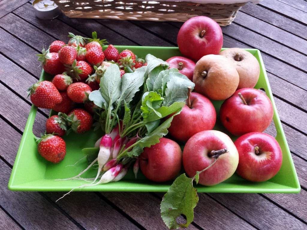 radis, fraises de la parcelle n°1, pommes
