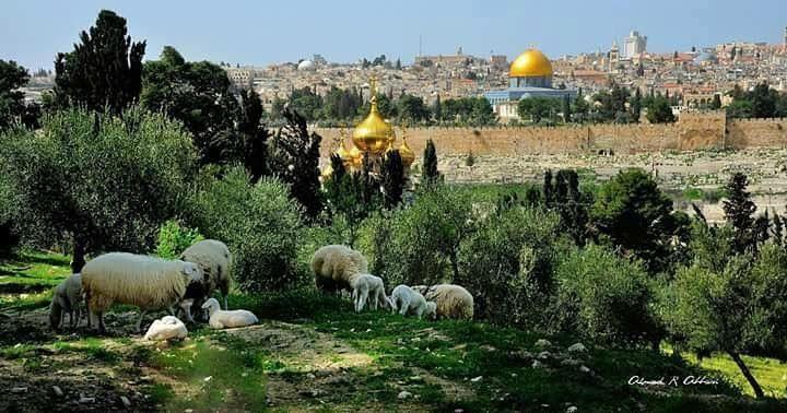 Al Qods,Palestine