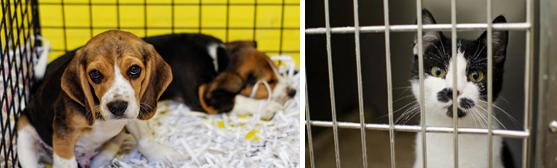 Les députés LAREM coupables de maltraitances animales à venir.
