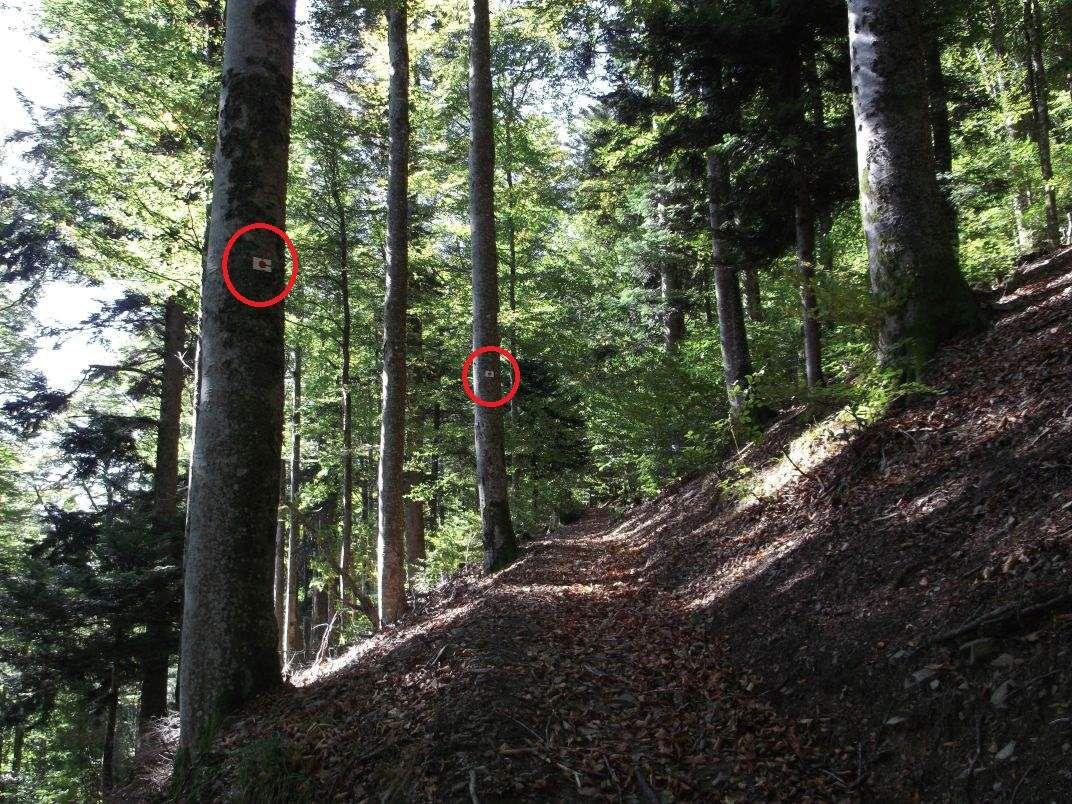 Le fléchage idéal se compose, comme ici, d'un premier panneau à un croisement de chemins, suivi d'un second panneau de confirmation un peu plus loin.