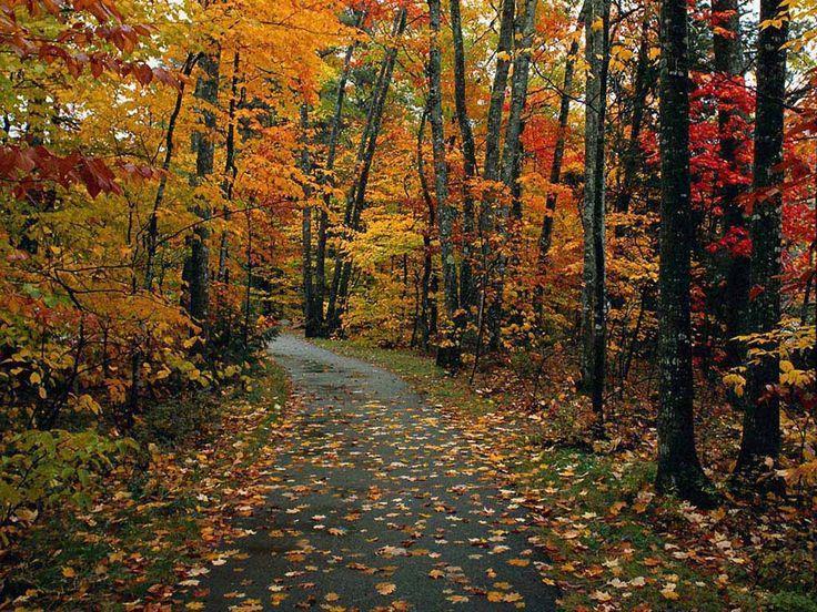 A Villeneuve-sur-Tarn, l'automne