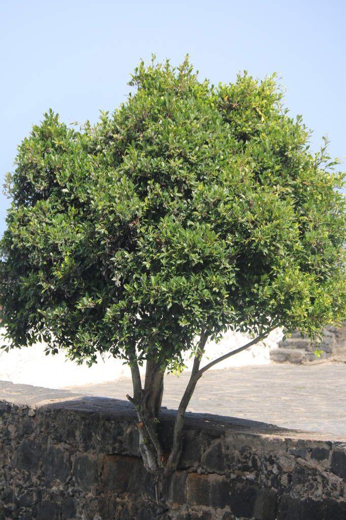 Tenerife en images