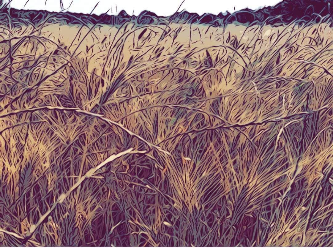 Mardi 1er juillet 1958 - Les passages au blé, les balles de fourrage