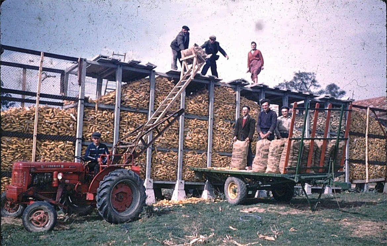 Lauragais d'Autrefois (27) : stocker le maïs (le milh sul trast)