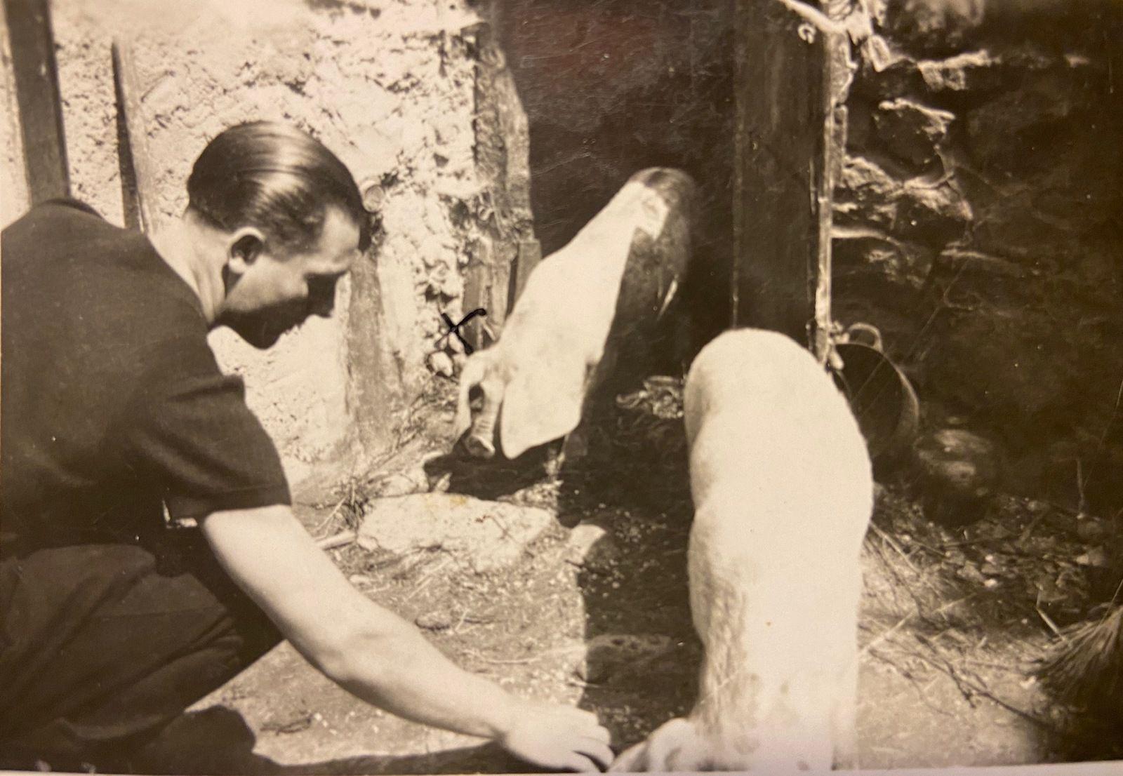 Lauragais d'Autrefois (53) : tuer le cochon, dernier jour (épisode 4, tuar le pòrc)