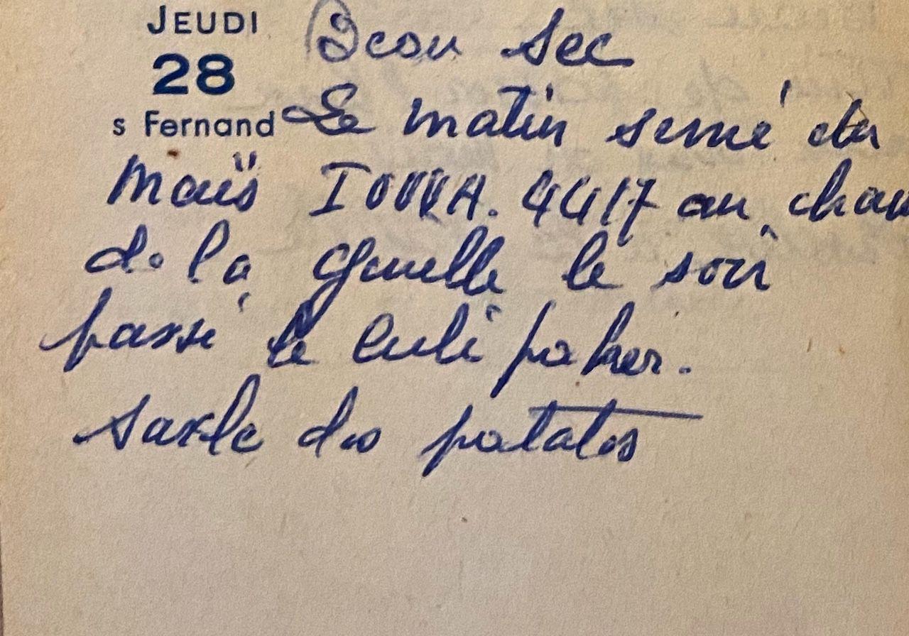 Jeudi 28 avril 1960 - Changement de variété de maïs