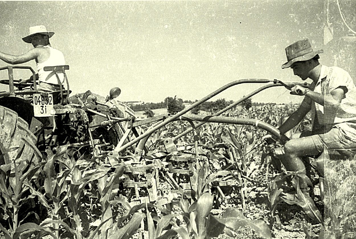 S'occuper du maïs - photo coll. Nardèse