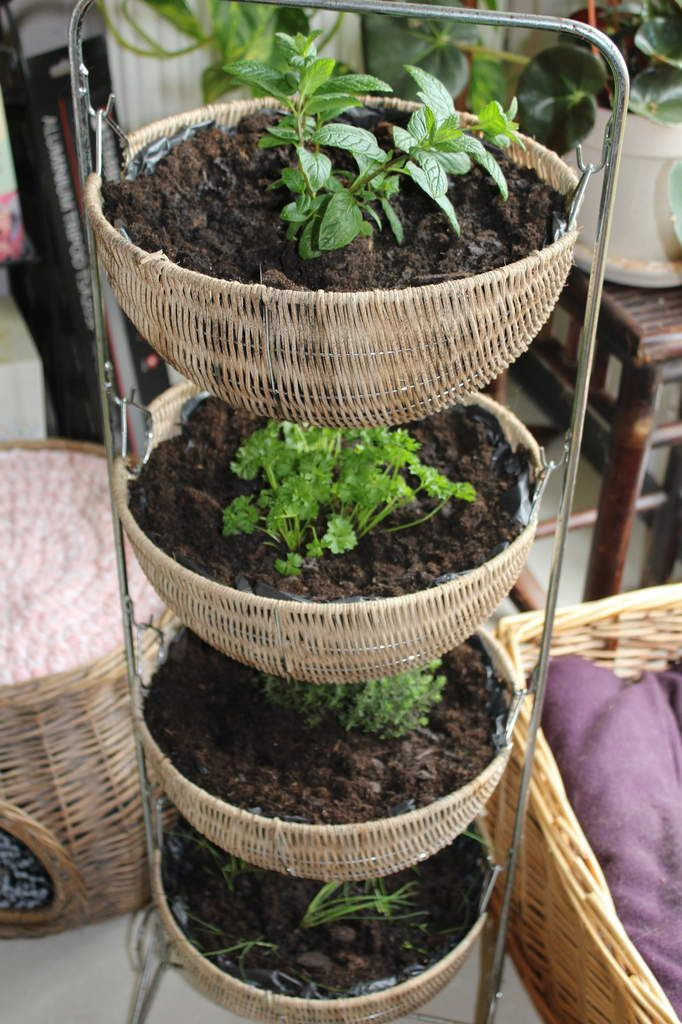 Plantes à étages