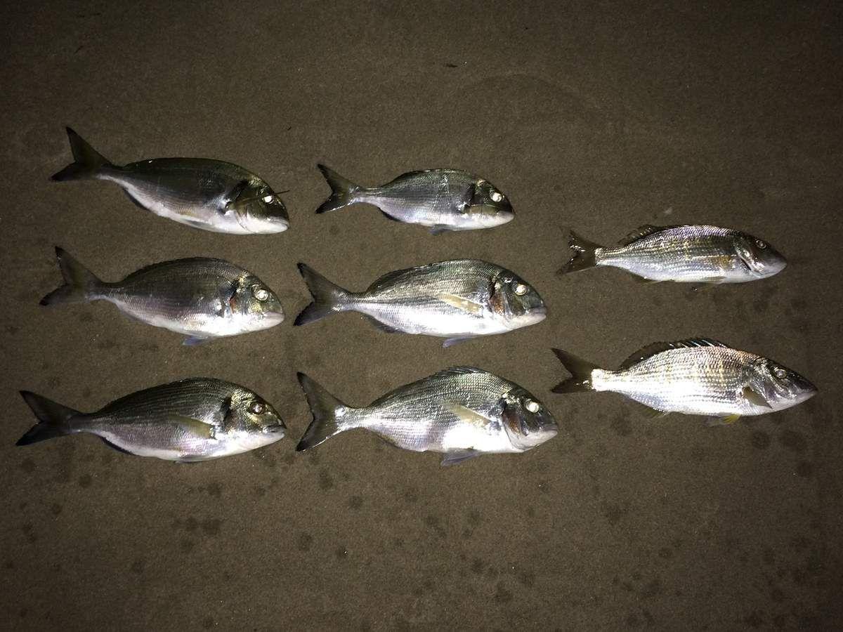 12/05/17 - Pêche difficile après le coup de mer