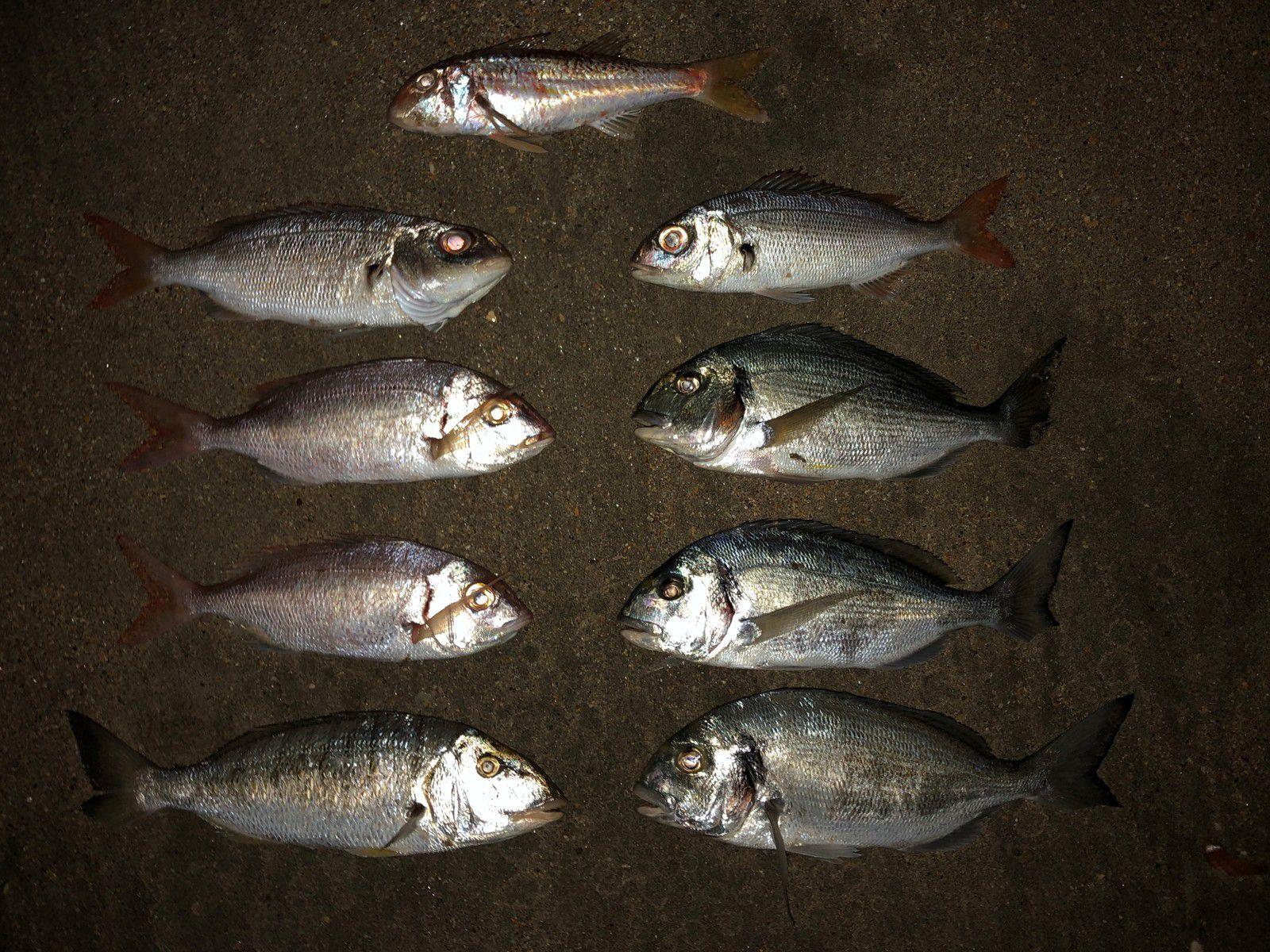 05/08/20 - Petite pêche variée