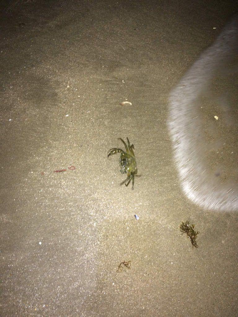 07/09/16 - Les crabes sont de sortie