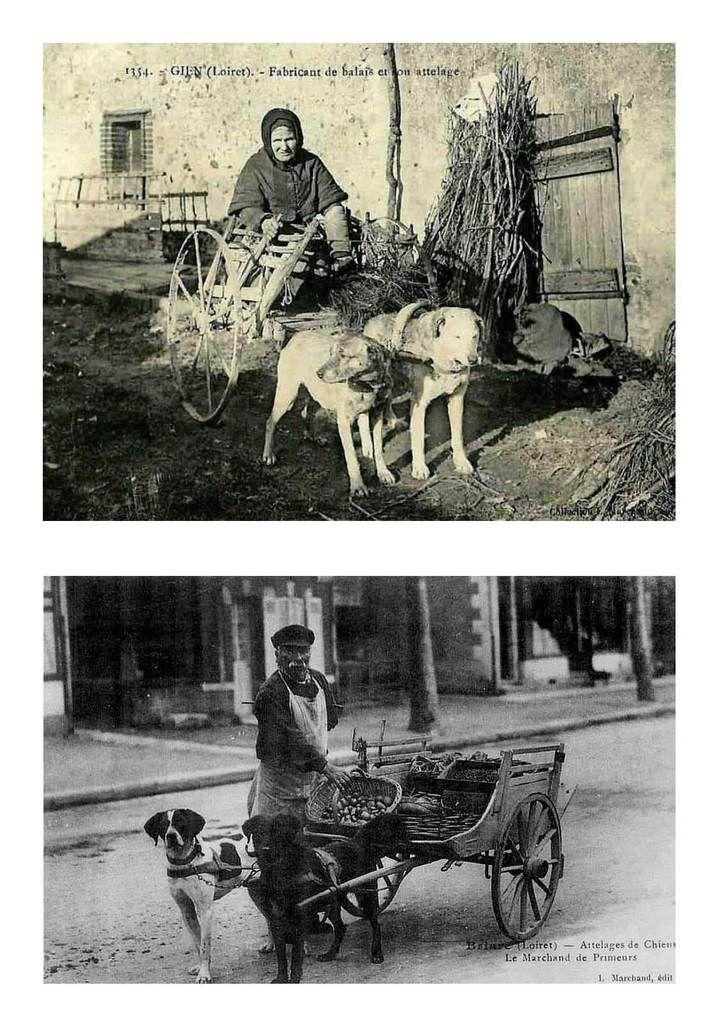 Cartes postales Attelage de chiens