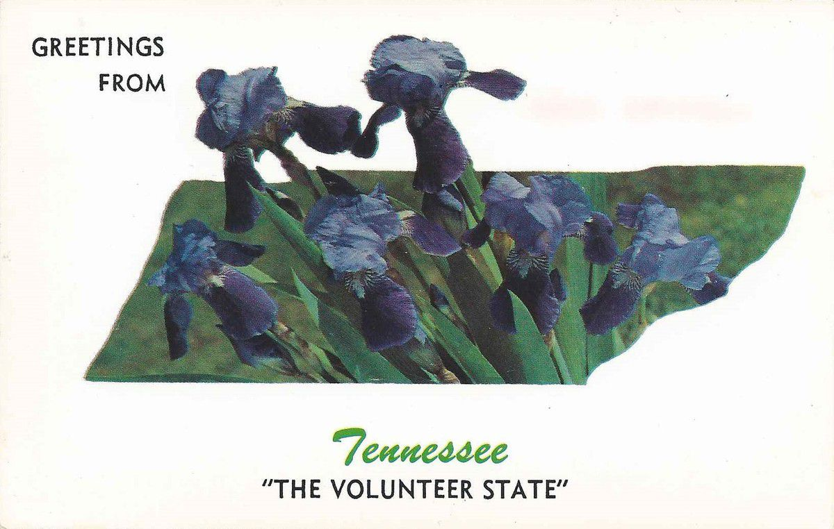 """IRIS - 1274 - GREETINS FROM TENNESSEE """"THE VOLUNTEER STATE"""""""
