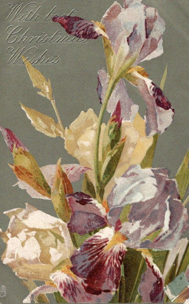 iris 1508 6 WITH BEST CHRISTMAS WISHES - 24.12.1907 -