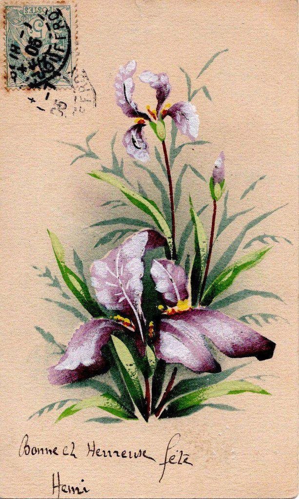 iris 1550 - BONNE ET HEUREUSE FÊTE   1905 -