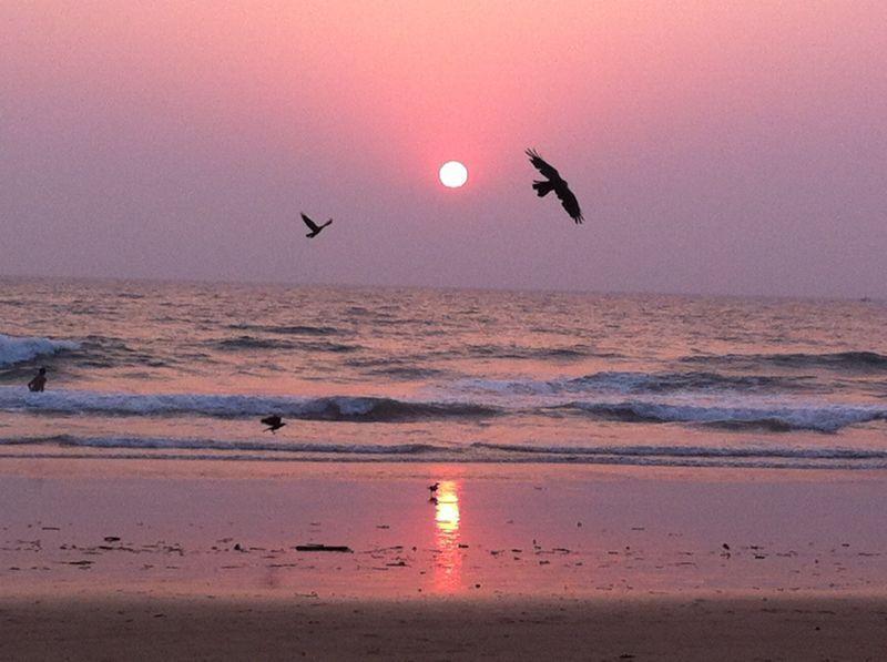 Goa cet hiver ou en 2021 ?