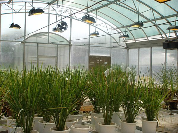 LET THE BEST GREENHOUSE SUPPLIER IN INDIA ENHANCE CROP QUALITY