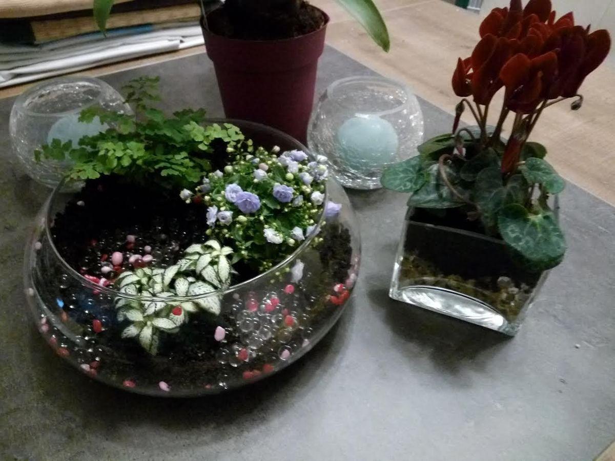 Deux petits terrariums