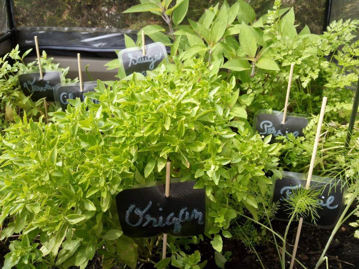 Mon jardin de plantes et herbes aromatiques