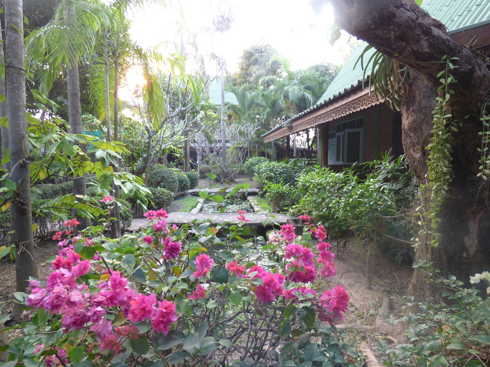 Sukhothaï : Orchid Hibiscus Guesthouse