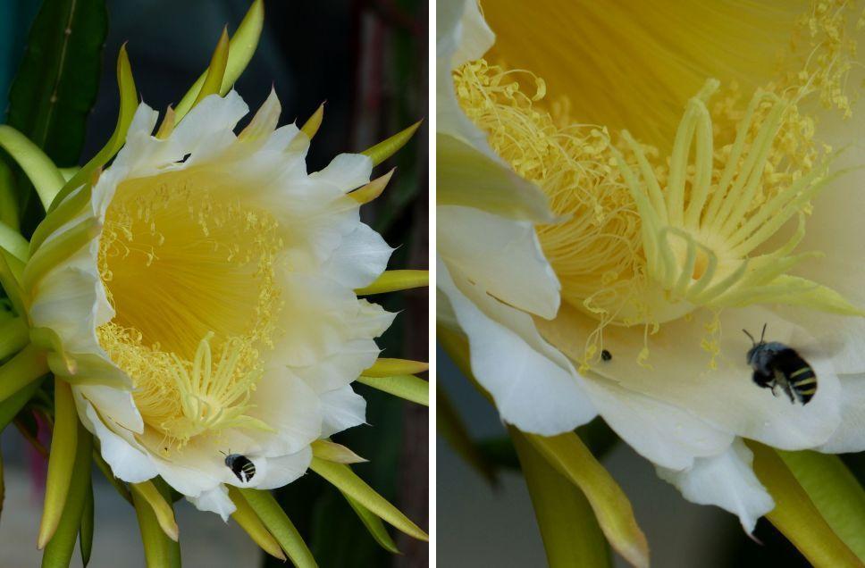 Fleur du jour (18-29)