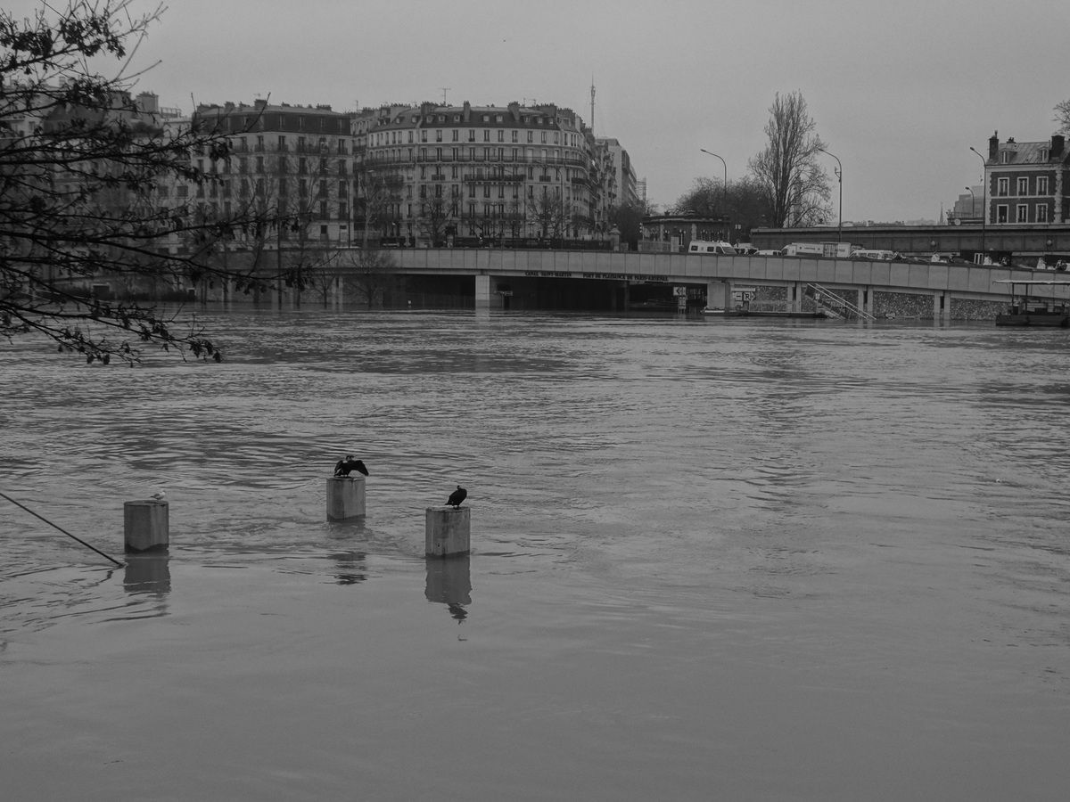 Paris – 27 janvier 2018 – Crue de la Seine, en noir et blanc