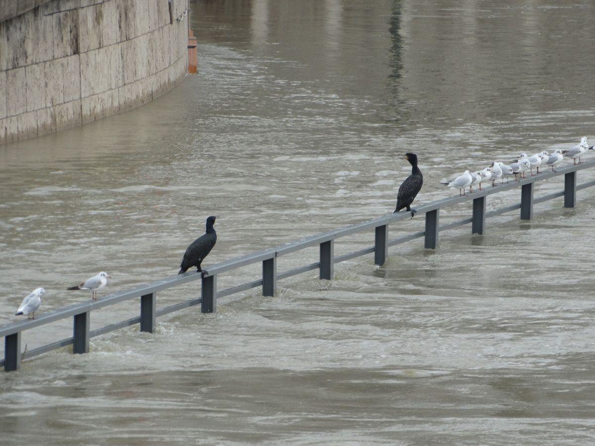 Paris – 27 janvier 2018 – Crue de la Seine (suite)