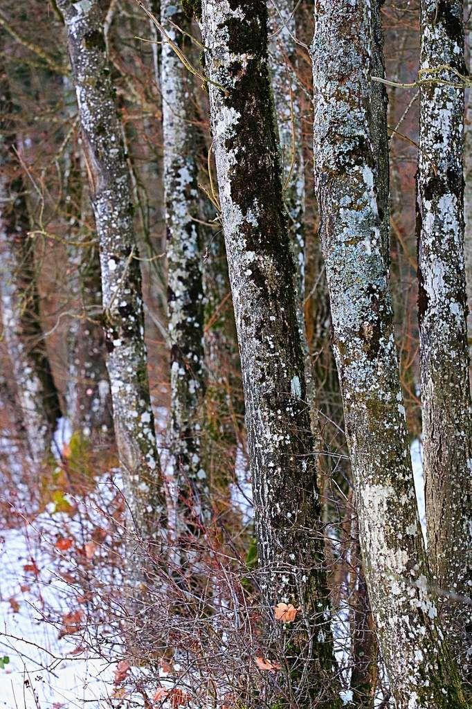 hivernale 5 bois de Bucley