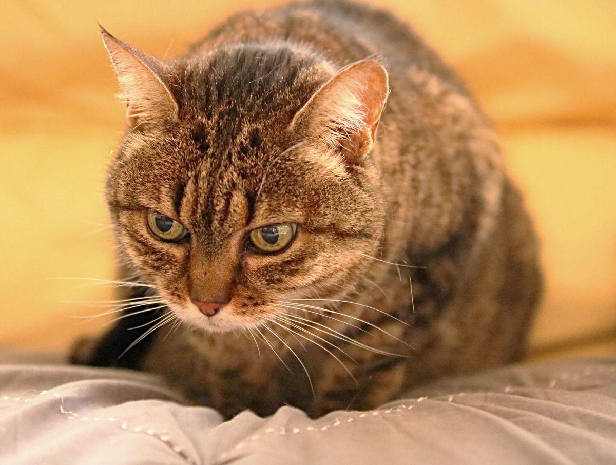 Poses kit cats