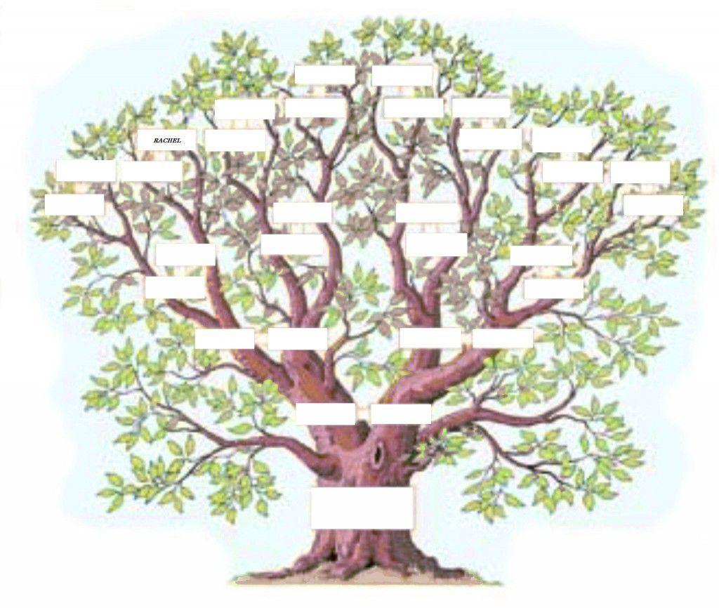 L-arbre-genealogique-exercice
