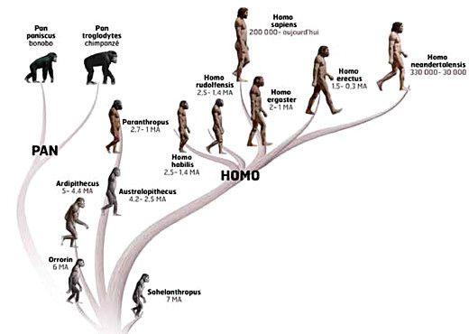 Que dire de la phylogénie et de la théorie de l'évolution ?