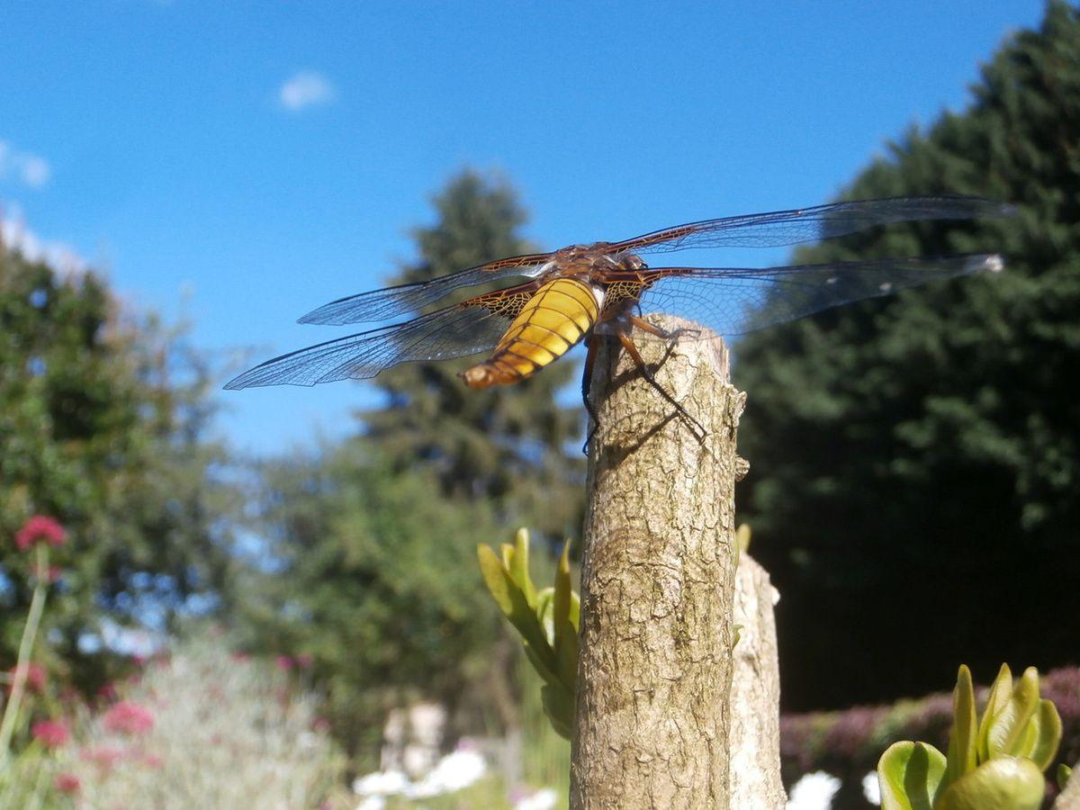 0e85ec5056f02 Les libellules et les hommes
