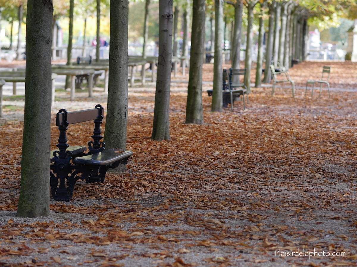 Allées du jardin du Luxembourg. Hybride Lumix GX 8 - ISO 100; 75 mm (150 mm en 24x36); f2,2; 1/400 sec. Photo non retouchée, non recadrée, compressée.