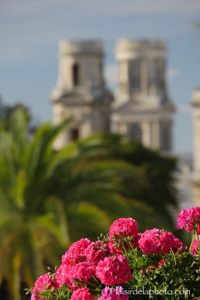 Paris Jardin du Luxembourg Eglise Saint Sulpice Fleurs Effet bokeh