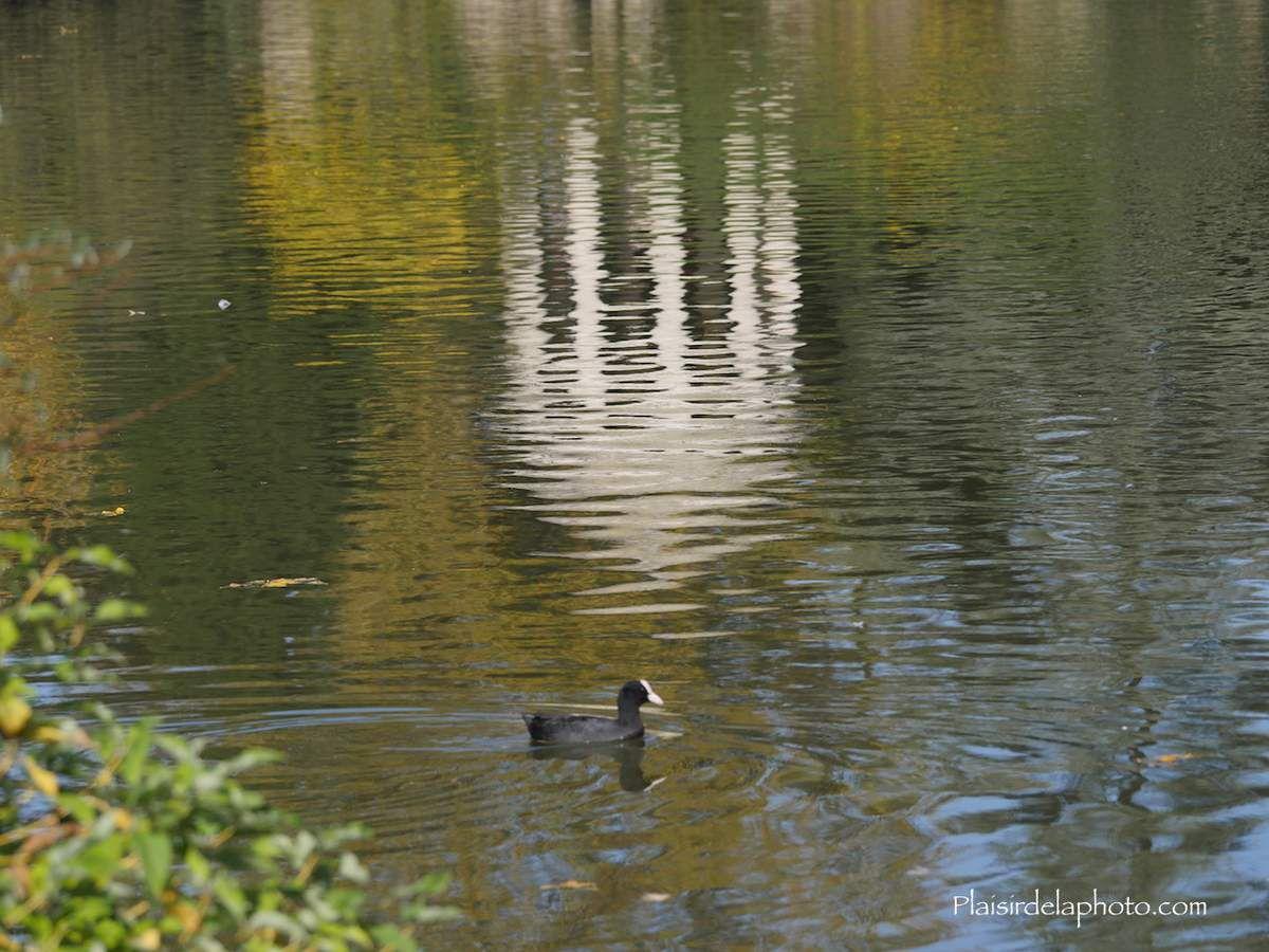 Paris - Lac Daumesnil - Hybride Lumix GX 8 - ISO 200; 114 mm (228 mm en 24x36); f5,6; 1/800 sec. Photo non retouchée, non recadrée, compressée.