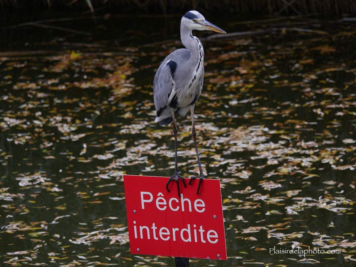 Paris - Parc de Bercy en novembre  - Hybride Lumix GX 8 - ISO 200; 108 mm (216 mm en 24x36); f4,1; 1/400 sec. Photo non retouchée, non recadrée, compressée.