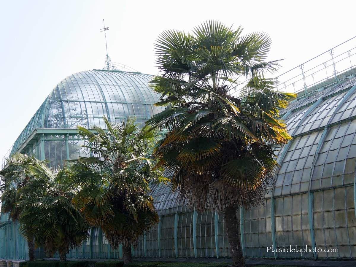 Les serres d'Auteuil à Paris - Hybride Lumix GX 8 - ISO 200; 19 mm (38 mm en 24x36); f3,8; 1/640 sec. Photo non retouchée, non recadrée, compressée.