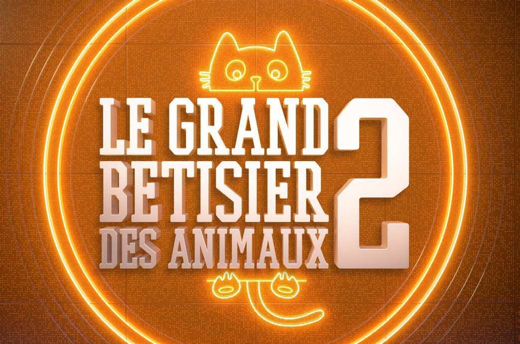 """""""Le grand bêtisier des animaux Vol 2"""" samedi 22 décembre à 21h00 sur C8"""
