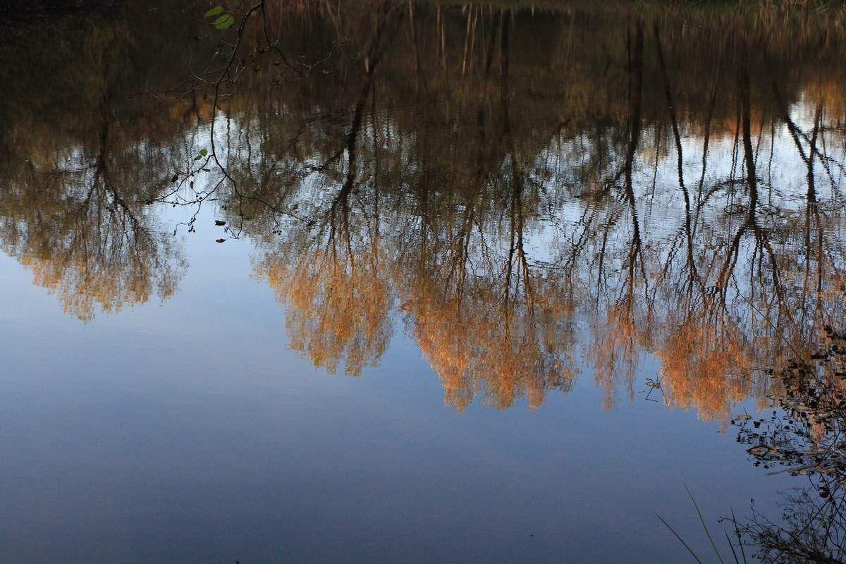 Chemins des marais