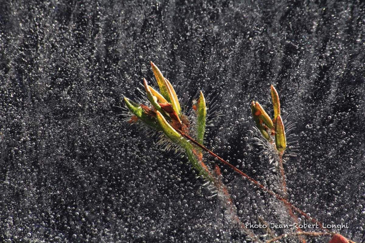Une araignée sur la glace