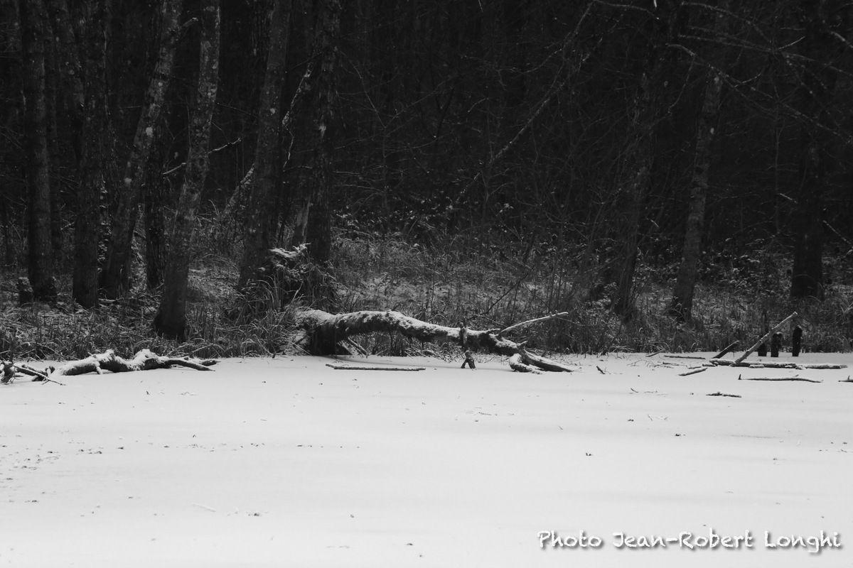 Première neige sur le marais