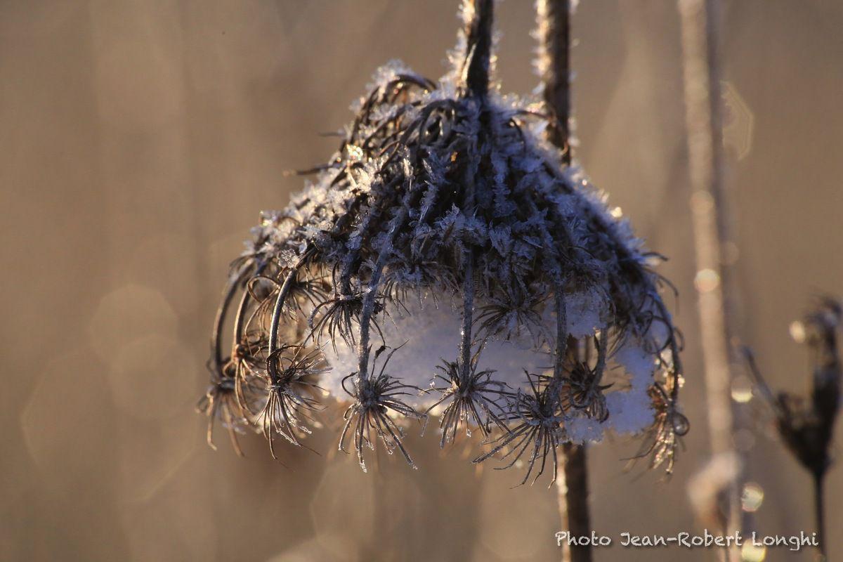 Après la première neige sur le marais