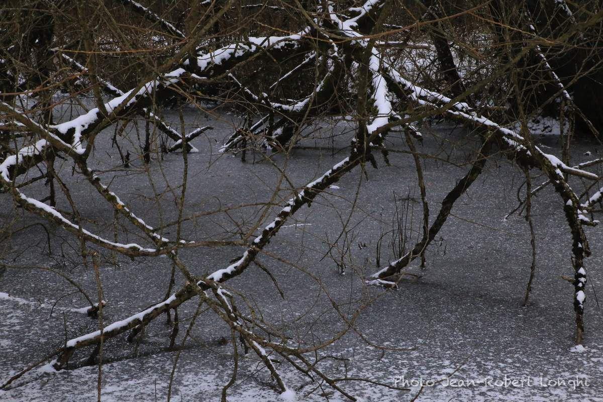 Metamorphoses d'hiver